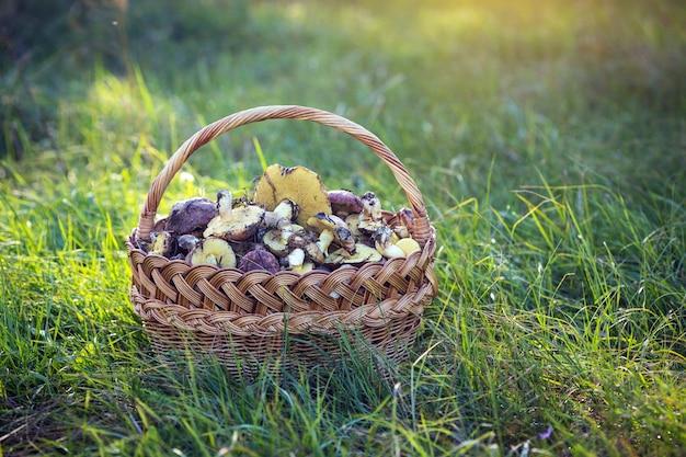 Korb mit pilzen auf einem hintergrund von grünem gras