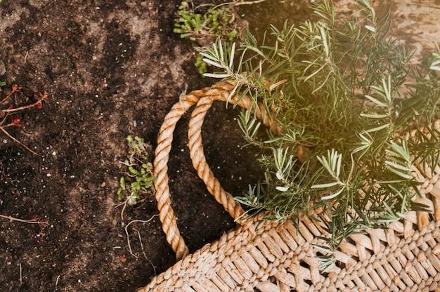Korb und pflanzen