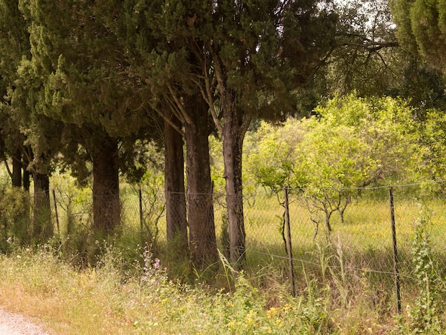Korfu-landschaft