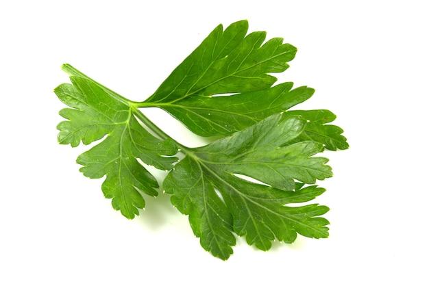 Korianderblatt lokalisiert auf weißem hintergrund. frisches sriprava-grün für lebensmittel aus nächster nähe.