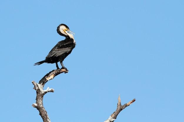 Kormoranvogel thront auf einem ast über dem himmel