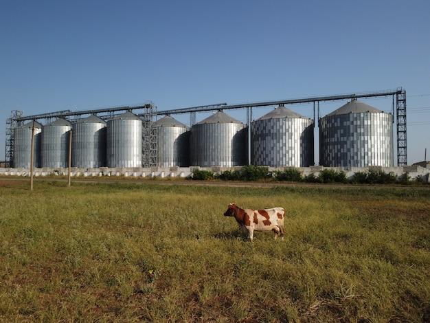 Kornelevator metallkornelevator in landwirtschaftlicher zone landwirtschaftslager für erntegetreide