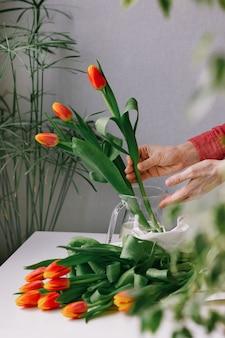 Kostbare rote tulpen in der hand einer frau europäischer florist bereitet einen blumenstrauß tulpen für a vor