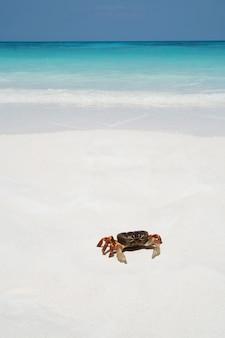 Krabbe am strand, thailand
