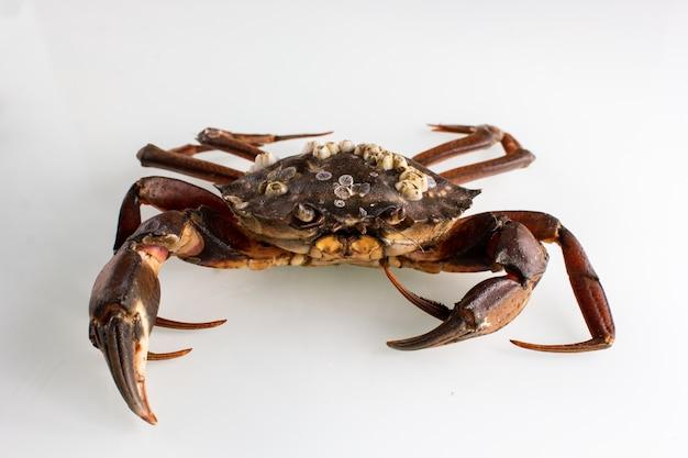 Krabbe auf einem weißen isoliert