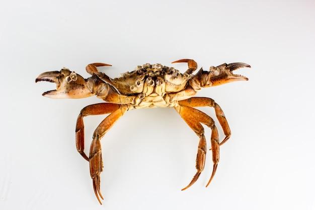 Krabbe isoliert auf weiß