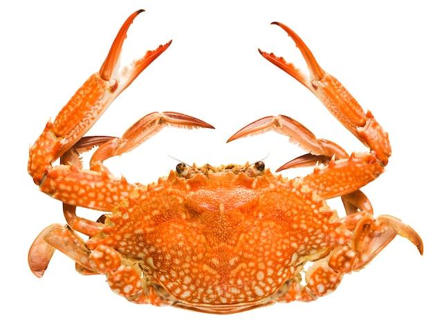 Krabbe lokalisiert auf weißem hintergrund