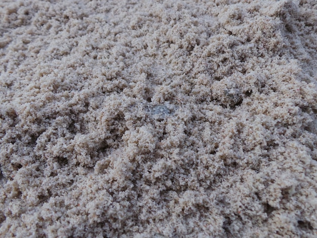 Krabbe peek-a-boo auf strandsand