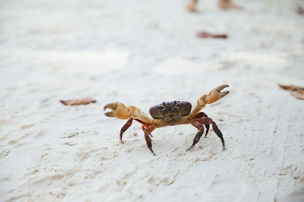 Krabben sie auf sand