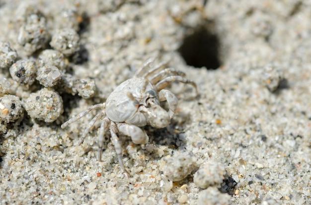 Krabben und sandkörner am strand mit unscharfem hintergrund.