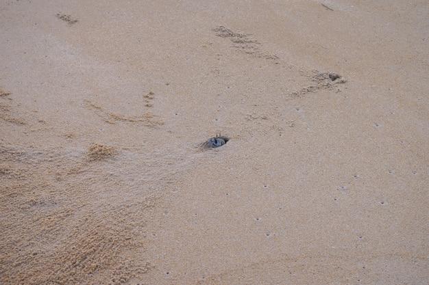 Krabbensandstrand