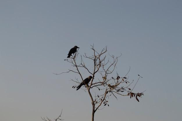 Krähen auf toter baum mit himmelhintergrund