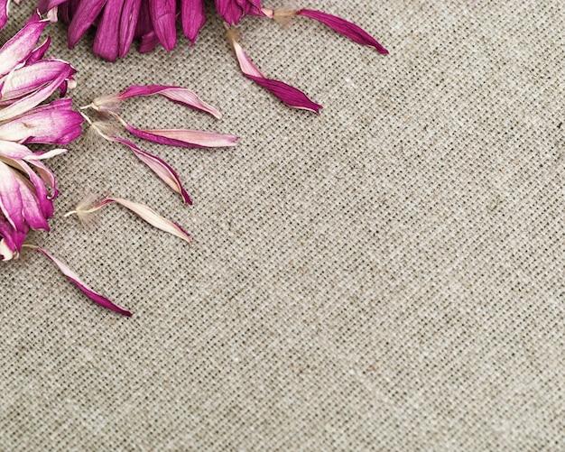 Kräuterhintergrund mit purpurroter trockener gerberablume nah oben