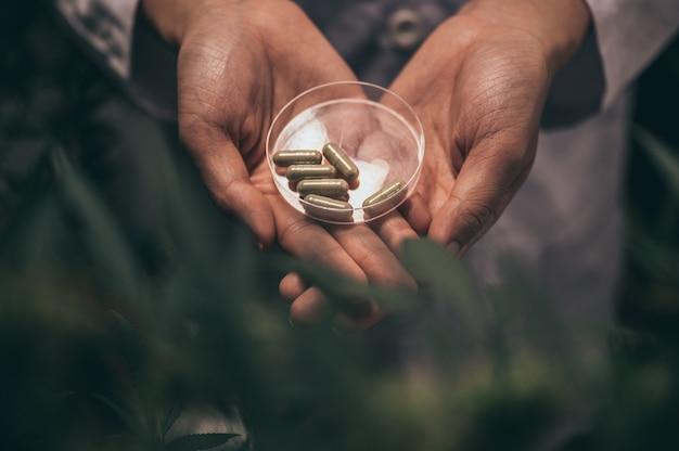 Kräuterkapseln aus cannabis-unkraut