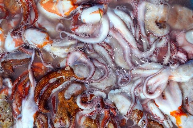 Krakenfang vom mittelmeer