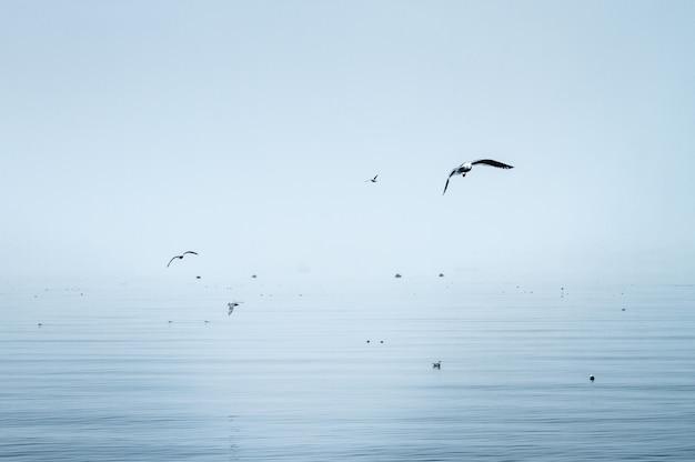 Kraniche, die über das meer fliegen und in hellblaue farben getaucht sind