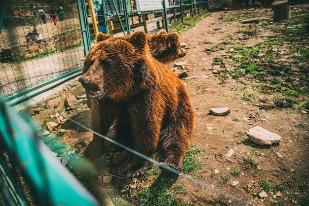 Kranke bären