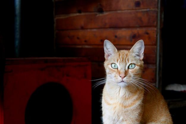 Kranke streunende katze, die gerettet wird
