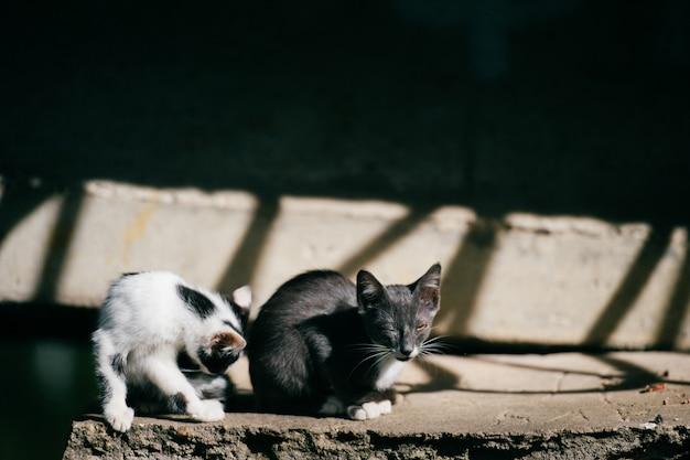 Kranke und obdachlose arme kätzchen