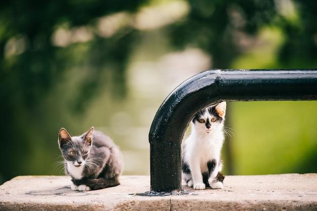 Kranke und obdachlose kätzchen im freien