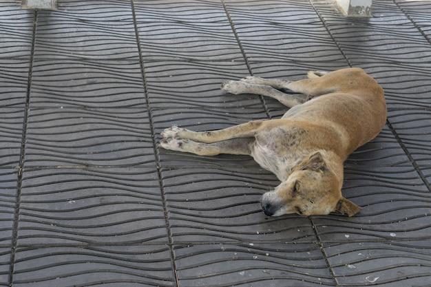 Kranker hund muss auf der straße leben., obdachloser thailändischer streunerhund