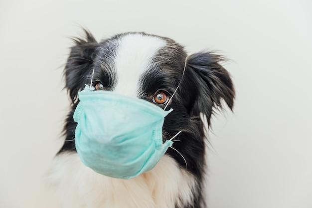 Kranker oder ansteckender hunde-border-collie, der eine chirurgische schutzmaske trägt