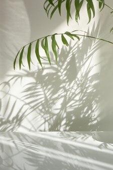 Kreative komposition aus natürlichen zweigen der immergrünen tropischen palmenpflanze mit dekorativen schatten auf einer hellen wand und oberfläche. schattenspiel an einer wand aus dem fenster am sonnigen tag.