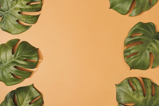 Kreative komposition aus tropischen monsterblättern auf pastellorange