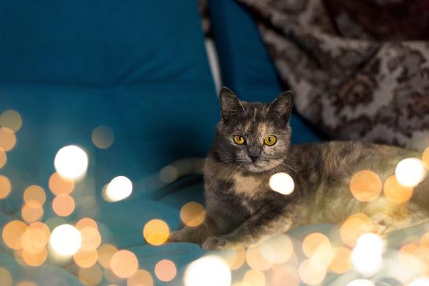 Kreative magische katze mit girlanden für die taufe. leichtes bokeh