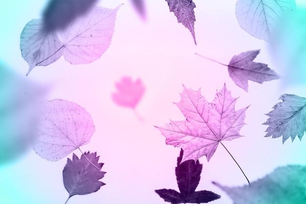 Kreativer herbsthintergrund mit fliegenden blättern. rosa getönt.