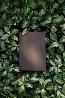 Kreativer layout-kompositionsrahmen aus grünen immergrünblättern mit schöner textur mit schwarzem ...