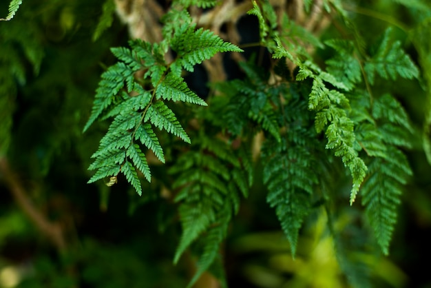 Kreativer naturplan gemacht von den tropischen blättern und von den blumen