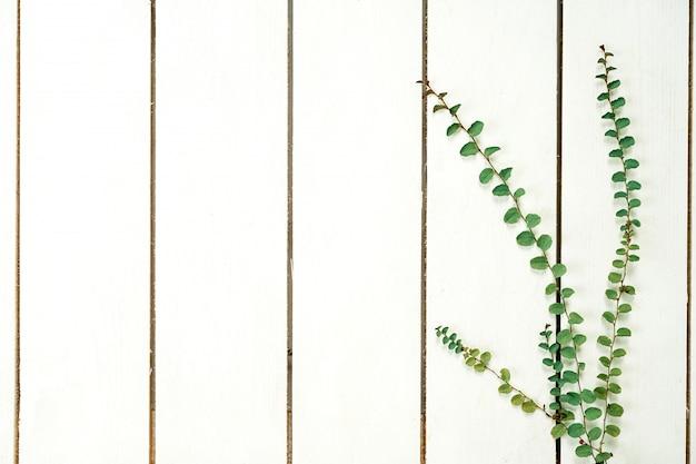 Kreativer plan des grüns verlässt efeu. flache lage auf weißem hölzernem hintergrund.