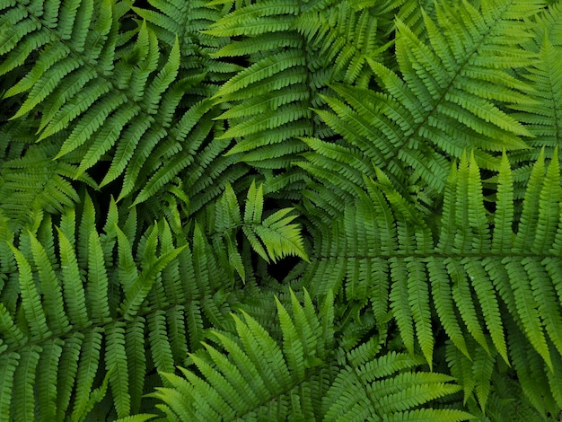Kreativer plan gemacht von den grünen blättern.