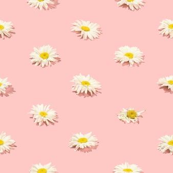 Kreatives blumenmuster von gänseblümchen auf rosafarbenem hintergrund. ansicht von oben.