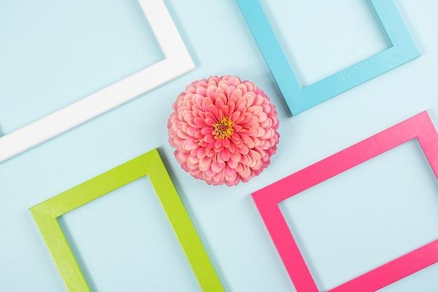 Kreatives layout aus einer blume und bunten rahmen. flat lay draufsicht kopierfläche.