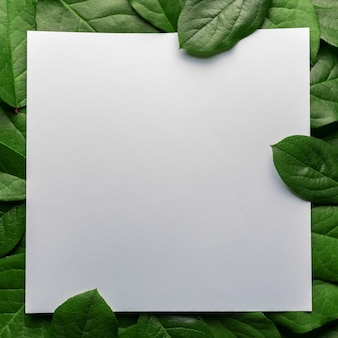 Kreatives layout aus grünen blättern mit papierkartennotiz