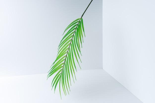 Kreatives layout aus grünen tropischen blättern