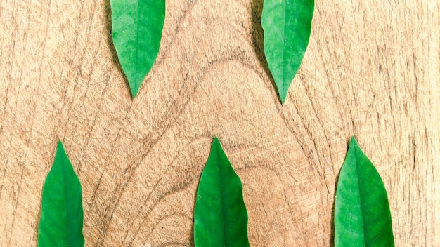Kreatives layout aus tropischen blättern auf holzhintergrund minimalistisches konzept mit kopierraum