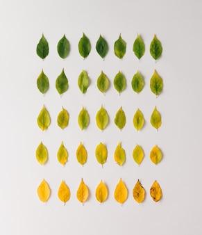 Kreatives layout der bunten herbstblätter. flach liegen. saisonkonzept.