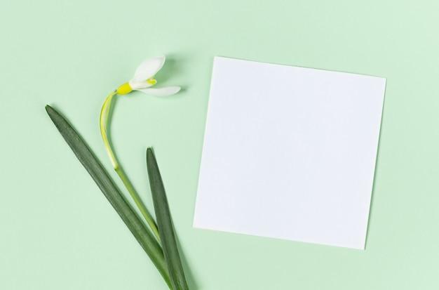 Kreatives layout mit schneeglöckchenblumen und weißem papier für kopienraum auf grünem hintergrund.