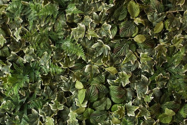 Kreatives tropisches grün lässt plan. natur-frühling-konzept. flach legen.