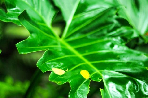 Kreatives tropisches grün verlässt plan. naturfrühlingskonzepthintergrund