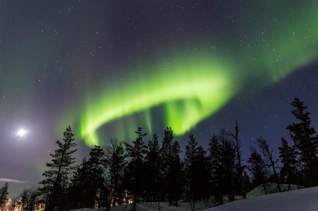 Kreisförmige aurora borealis neben dem mond über einem wald