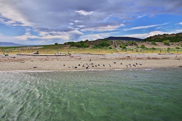 Kreuzfahrt auf dem beagle-kanal in der nähe der stadt ushuaia, feuerland, argentinien