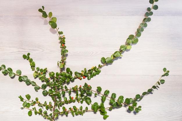 Kriechpflanze, die auf hölzerner wand wächst