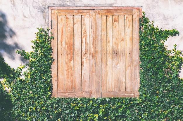 Kriechpflanzengrün-musterbetriebsfenster eines hauses.