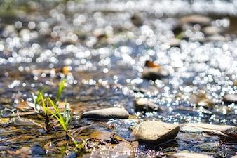 Kristallklares Wasser, das über Felsen in Ströme fließt. Bäche im Wald. Natur backgro