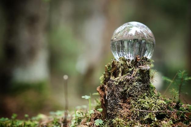 Kristallkugel. magisches accessoire im wald auf dem baumstumpf. ritualball von hexen und zauberern auf einem alten faulen stumpf, der mit moos bedeckt ist.