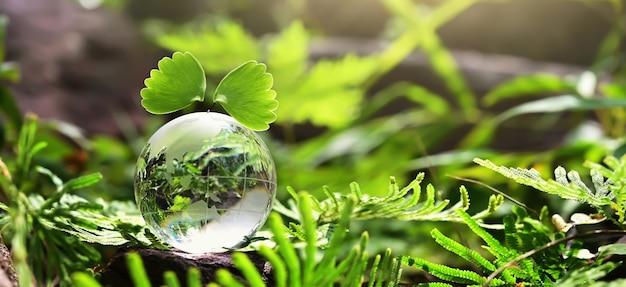 Kristallkugelglas, das auf stein mit grünem blatt und sonnenschein in der natur ruht. öko-umweltkonzept